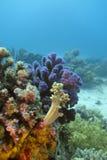 Koraalrif met harde en zachte koralen op de bodem royalty-vrije stock foto