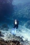 Koraalrif met harde koralen en duiker bij de bodem van tropische overzees Stock Foto