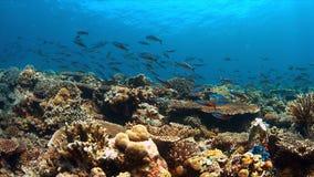 Koraalrif met overvloed van vissen Stock Afbeeldingen