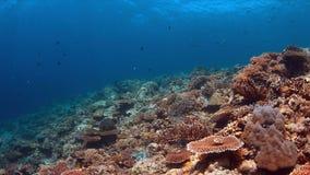 Koraalrif met overvloed van vissen Stock Foto