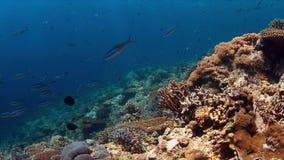 Koraalrif met overvloed van vissen Stock Afbeelding