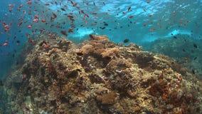 Koraalrif met overvloedsvissen Stock Afbeeldingen