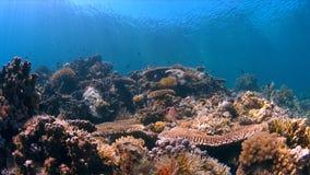 Koraalrif met overvloedsvissen Stock Foto