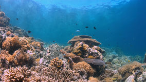 Koraalrif met overvloedsvissen Stock Afbeelding