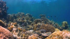 Koraalrif met overvloedsvissen Royalty-vrije Stock Foto