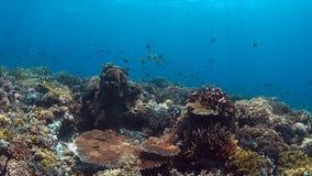 Koraalrif met overvloedsvissen Stock Fotografie