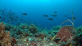 Koraalrif met overvloedsvissen Stock Foto's