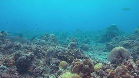 Koraalrif met overvloedsvissen 4k stock videobeelden