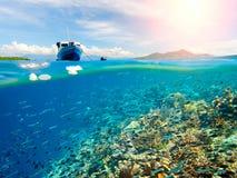 Koraalrif met vele vissen dichtbij Bunaken-Eiland, Indonesië royalty-vrije stock afbeelding