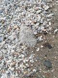 Koraalrif onder pepples op strandkust stock foto's