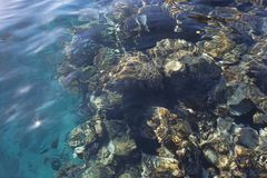 Koraalrif onder water Royalty-vrije Stock Foto