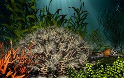 Koraalrif onderwater Royalty-vrije Stock Foto