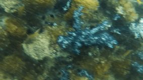 Koraalrif onderwater met groepen vissen stock footage