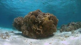 Koraalrif in ondiep water Stock Afbeelding