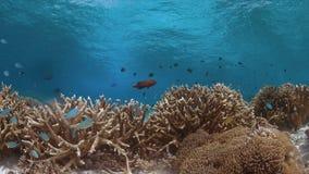 Koraalrif in ondiep water Stock Fotografie
