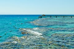 Koraalrif op het Rode Overzees Eilat stock afbeeldingen