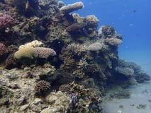 Koraalriffen bij de bodem royalty-vrije stock afbeelding