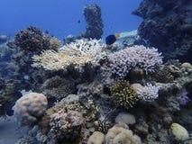 Koraalriffen bij de bodem royalty-vrije stock foto