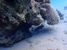Koraalriffen bij de bodem stock foto's