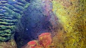 Koraalriffen en het mariene leven in beeldverhaalvorm stock footage