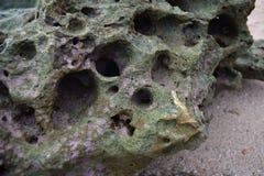 Koraalriffen op strand Stock Afbeeldingen