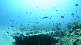 Koraalriffen van het overzees van cortez, Mexico stock videobeelden