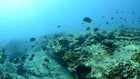 Koraalriffen van het overzees van cortez, Mexico stock video