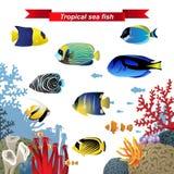 Koraalrifvissen royalty-vrije illustratie