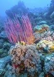 Koraaltuin onderwaterbali stock afbeelding