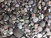 koral Obrazy Stock
