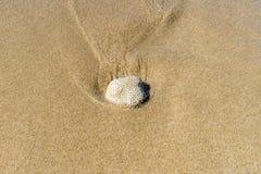 koral Zdjęcie Royalty Free