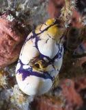 koral fotografia stock