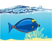 koral błękitny ryba Zdjęcie Royalty Free