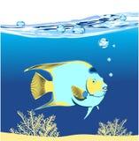 koral błękitny ryba Zdjęcie Stock