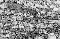 Koral ściana Zdjęcie Royalty Free