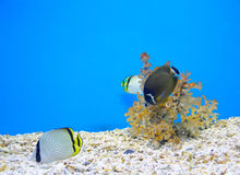 Koral i ocean Fotografia Stock
