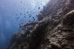 Koral i podwodny życie rybi i naturalny Obrazy Royalty Free