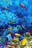 Koral i ryba fotografia stock
