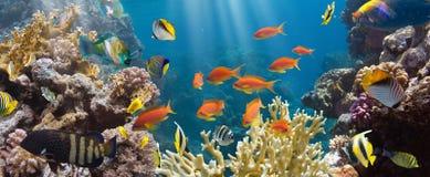 Koral i ryba Zdjęcia Royalty Free