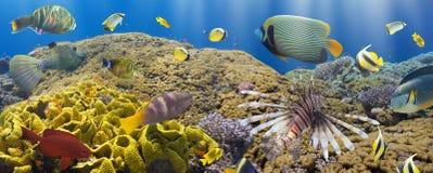 Koral i ryba fotografia royalty free