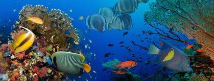 Koral i ryba obraz stock