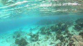 Koral i ryba na Bonaire zbiory