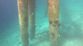 Koral i ryba na Bonaire zdjęcie wideo