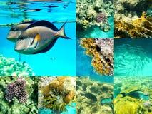 Koral i ryba w Czerwonym morzu, Egipt, Afryka Obraz Royalty Free