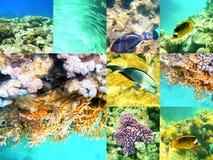 Koral i ryba w Czerwonym morzu, Egipt, Afryka Zdjęcia Royalty Free