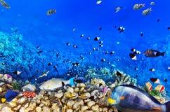Koral i ryba w Rewolucjonistce sea.Egypt obrazy stock