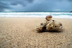 Koral i skorupa na piaskowatej plaży zdjęcia royalty free