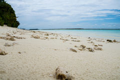 Koral na plaży, Maldives, Ari atol obrazy royalty free