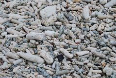 Koral plaża, tło Fotografia Stock