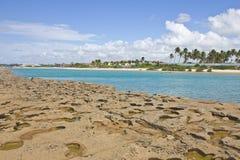 Koral przy Porto De Galinhas plażą Obraz Royalty Free